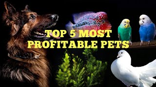 Top 5 Most Profitable Pets in our Hobby...