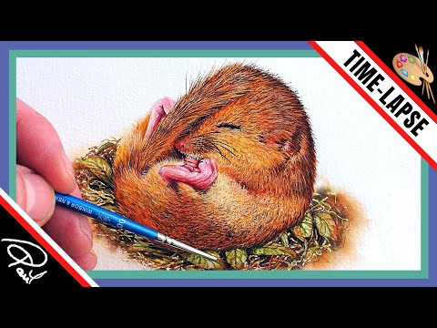 How To Paint Wildlife In Watercolour - Painting Tutorial Step by Step Online School - Dormouse thumbnail