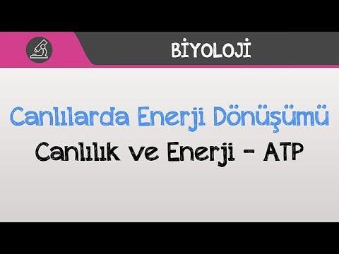 Canlılarda Enerji Dönüşümü - Canlılık ve Enerji - ATP