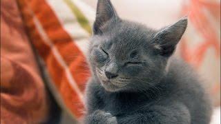 Как и почему урчат кошки? - Все обо всем