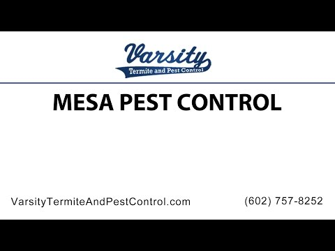 Mesa Pest Control By The Team At Varsity