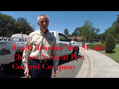 Top 6 Reasons Why You Should Choose A Local Pest Control Company- Savannah Termite and Pest Control