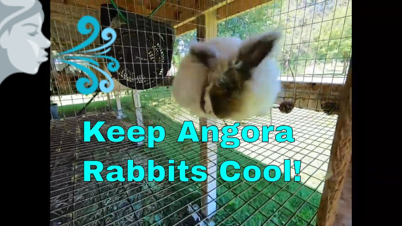 Keeping angora rabbits cool in summer heat