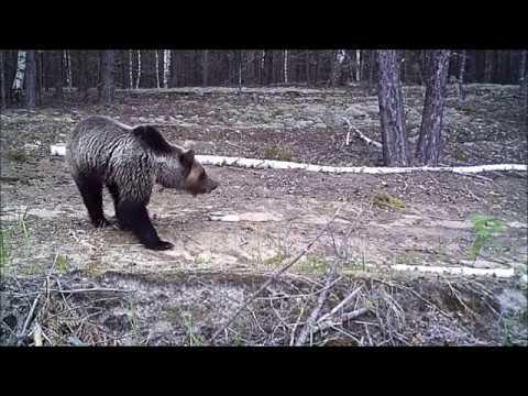 Видеоролик про зверей Керженского заповедника.