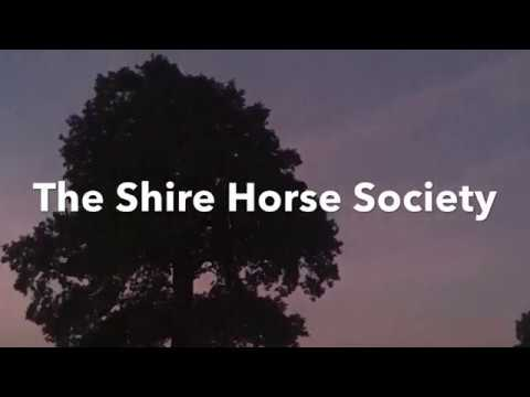 shire-horse-society---the-toilet-roll-challenge-2020