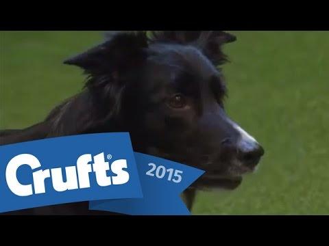 Agility - International Invitation - Large - Jumping | Crufts 2015