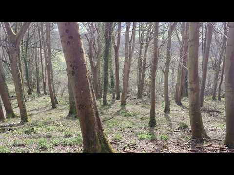 Selworthy Woods with Maverick