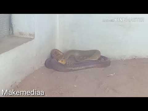 India In Tamil Nadu  In Coimbatore V. O .C  Zoo Park