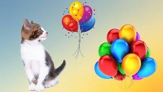 😻🎈Кошки и коты играют в шары #воздушныешарики Позитив!🎈🎈🎈
