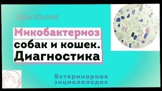 Микобактериоз у собак и кошек. Диагностика