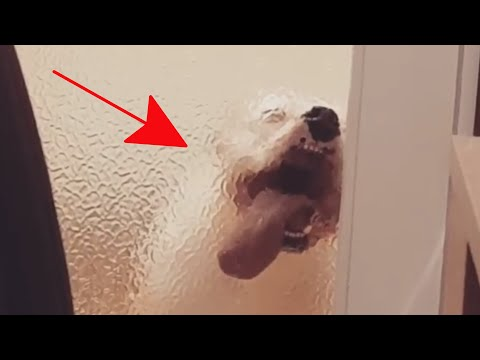 Try Not To Laugh Watching Funny Animal Fails Compilation 2020