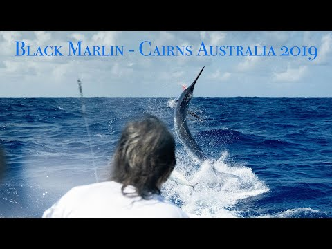 Black Marlin Fishing, Cairns Australia With Captain Ross Finlayson