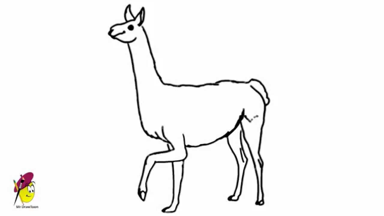 Line Drawing Llama : Llama how to draw a easy animal drawings youtube