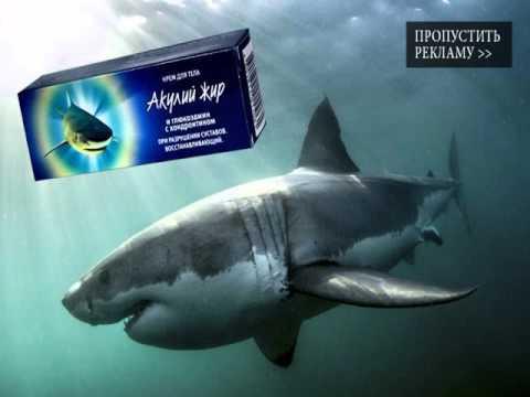 сколько стоит акулий жир