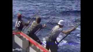 Tuna fishing 85 Port Lincoln 150 kg plus fish biggest seen in my years fishing