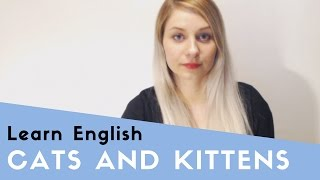 Cats and Kittens thumbnail picture.