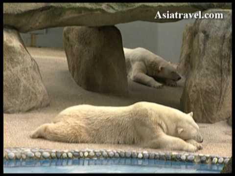 Singapore Zoo by Asiatravel.com