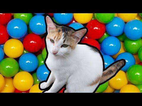 Lagu Anak Si Meong Kucing Lucu