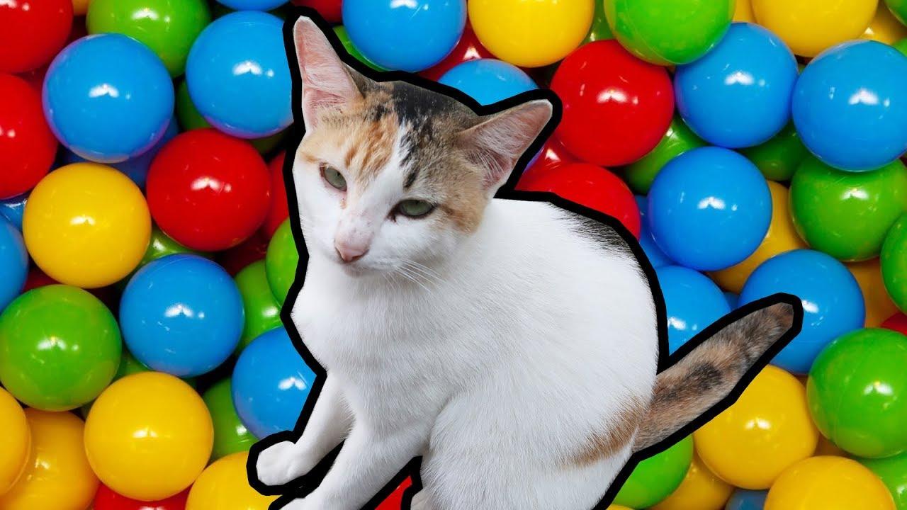 Download 97+  Gambar Kucing Lucu Ungu Imut Gratis