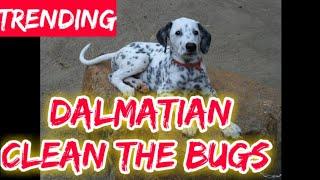 101 Dalmatians Movie Series Full