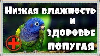 Влияние сухого воздуха на здоровье попугая. Низкая влажность воздуха. Что делать?