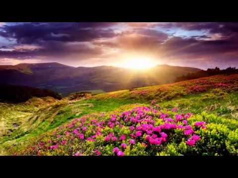 Colorful Flowers Field (HD1080p)