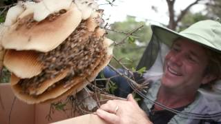 Simple Inspiration With Savannah Bee Company