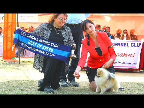 Patiala Dog Show 2017 | Highlights & Results | Dogs99.com