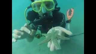 видео «Челюсти» по-израильски. В Средиземном море у берегов Израиля появились стаи акул