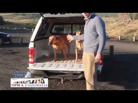 best-dog-training-school-online-online-dog-training-videos-program-how-to-house-train-an-older-dog