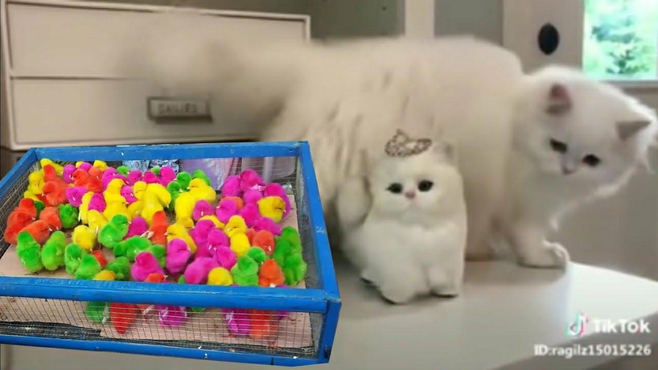 full video kucing tiktok tik tok kucing lucu banget gemesin youtube