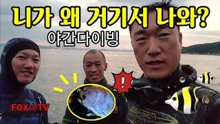 대박징그러운기생충/해루질체험/무늬오징어-FOX☆TV