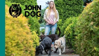 Pies na wakacjach okiem weterynarza vol.2 - ZDROWIE PSA - John Dog
