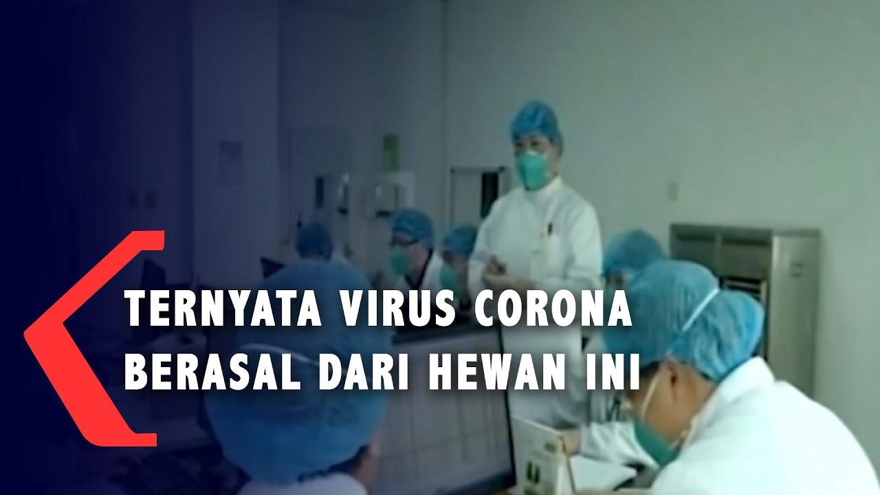 Ternyata Virus Corona Berasal Dari Hewan Ini... - YouTube