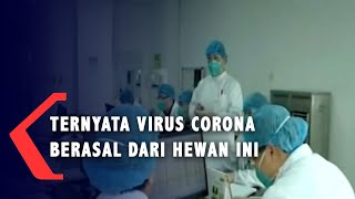 Jakarta, kompas.tv - virus corona yang saat ini sedang ramai diperbincangkan, diduga berasal dari ular. dilansir kompas.id hari jumat (24/01/2020), viru...