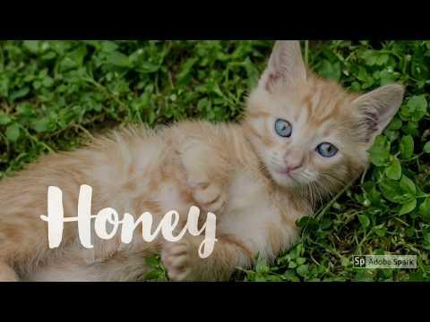 Female Kitten Names Inspiration 2017