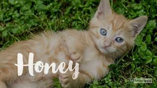 Female Kitten Names Inspiration 2017