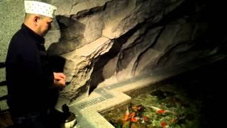 Кормление золотых рыбок / Feedind MISATO's Goldfish