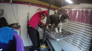 Dog Grooming 101 - OC DOG HOUSE Grooming