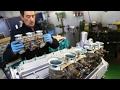 Come funziona il Carburatore - Davide Cironi Drive Experience (ENG.SUBS)
