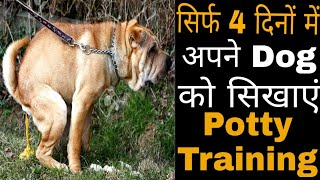 How To Potty Train Your Dog Or Puppy In Only 4 Days In Hindi/ Potty training a dog in hindi