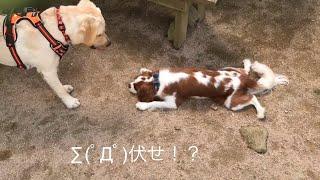 ツイッターアカウント http://twitter.com/kinakochannelu ドッグランに...