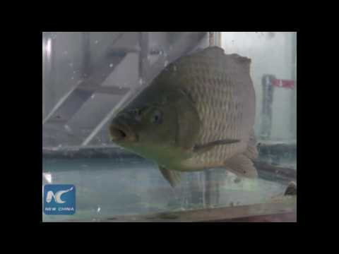 Frozen Fish Comes Back To Life?