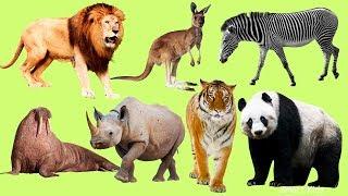 Животные для детей | Учим Названия Звуки и Голоса Животных | Животные в Мире | Как Говорят Животные