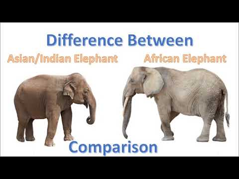 Difference between Asian and African Elephants | asian vs african elephant comparison