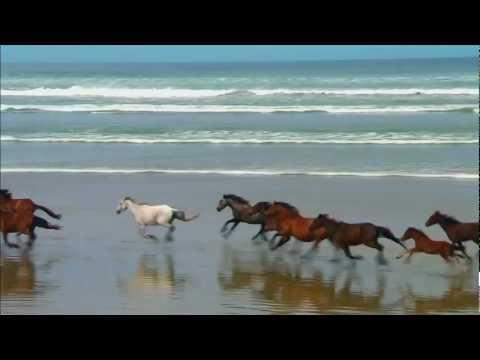 Kuda berlari kencang
