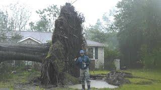 Hurricane Florence topples massive tree