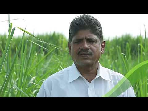 खरे शेतकरी. खऱ्या गोष्टी - श्री. प्रशांत देशमुख. पीक - ऊस