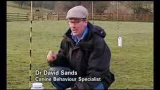 Dog Suicide Bridge Scotland 'tv Documentary'
