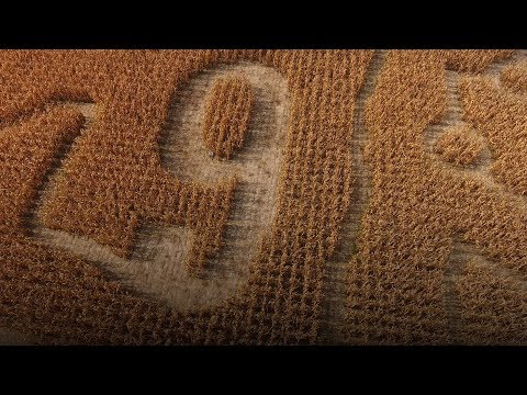 """""""Philly Special"""" corn maze takes Eagles football fandom to another level"""